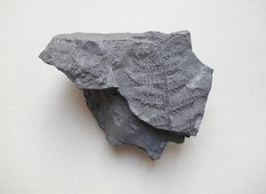 Minerał z odciskiem rośliny